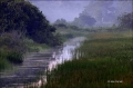 Everglades;Scenic;Fog;Water
