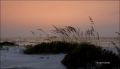 Sea-Oats;Sunset;Florida;Southeast-USA;Unilola-paniculata;Beach;Water;Sky