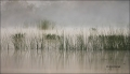 Florida;Southeast-USA;Fog;Scenic;Wetlands;Grass
