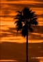 Sunset;Clouds;Palm-Tree;Sky;Silhouette