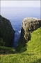 Newfoundland;Scenic;Cape-Saint-Marys;Cape-Saint-Marys;Breeding-Colony;Breeding-B