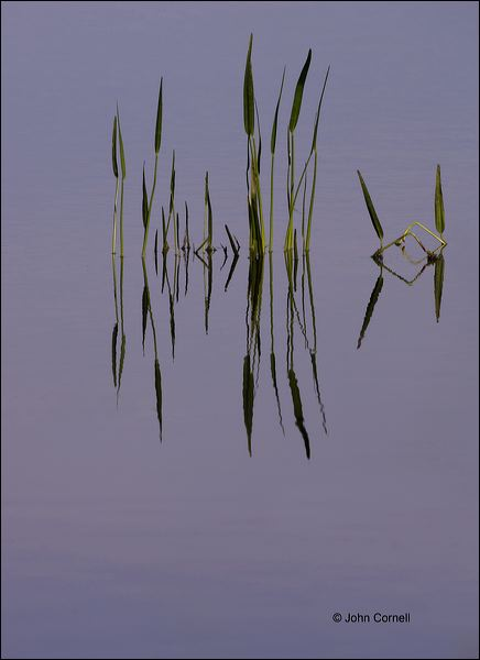 Sunrise;Everglades;Grass and Water;Reflection