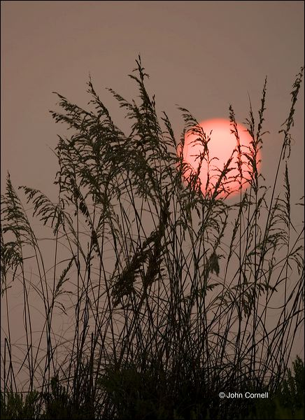 Florida;Sea Oats;Sunset;Unilola paniculata;Beach