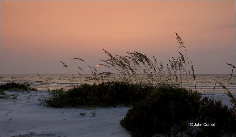 Sea Oats;Sunset;Florida;Southeast USA;Unilola paniculata;Beach;Water;Sky