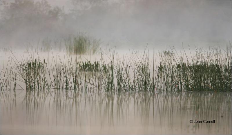 Florida;Southeast USA;Fog;Scenic;Wetlands;Grass