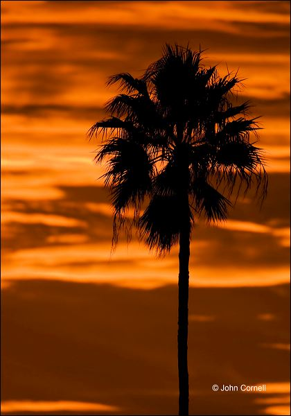 Sunset;Clouds;Palm Tree;Sky;Silhouette