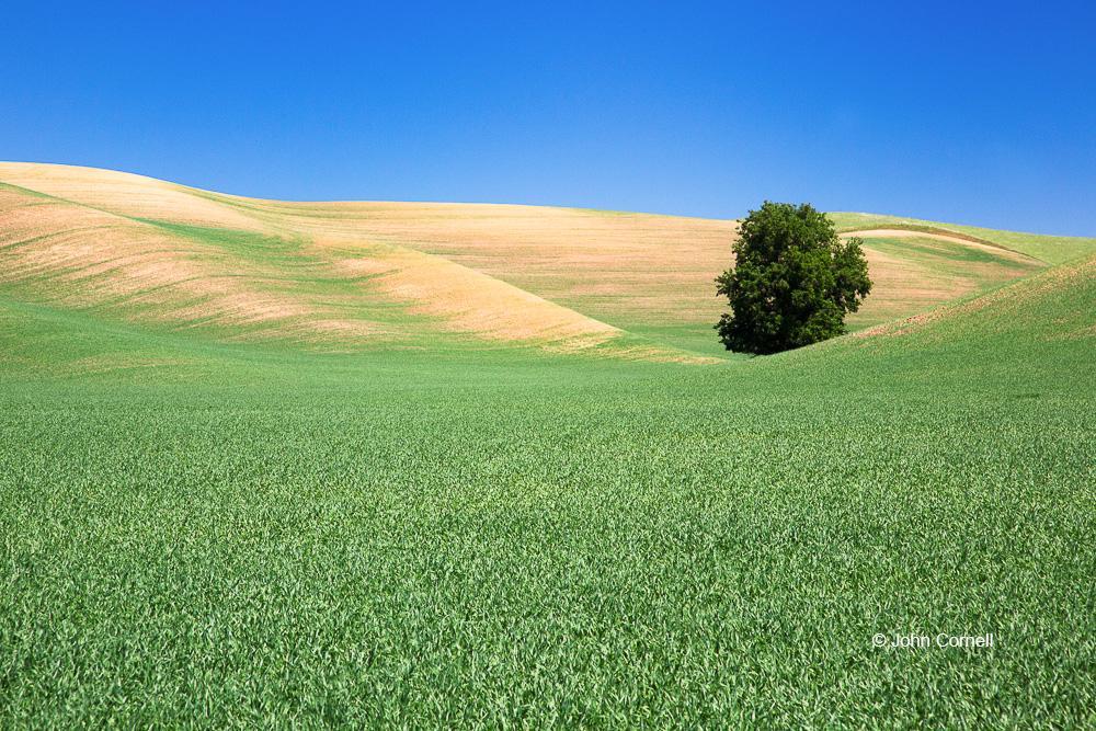 Palouse;Washington, grass, hills, tree, sky, clouds, scenic, spring