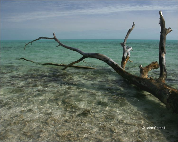 Water;Beach;Driftwood;Waves;Tropical;Blue Sky