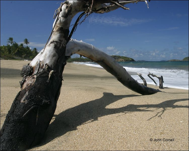 Water;Beach;Driftwood;Waves;Tropical;Surf;Blue Sky;Scenic