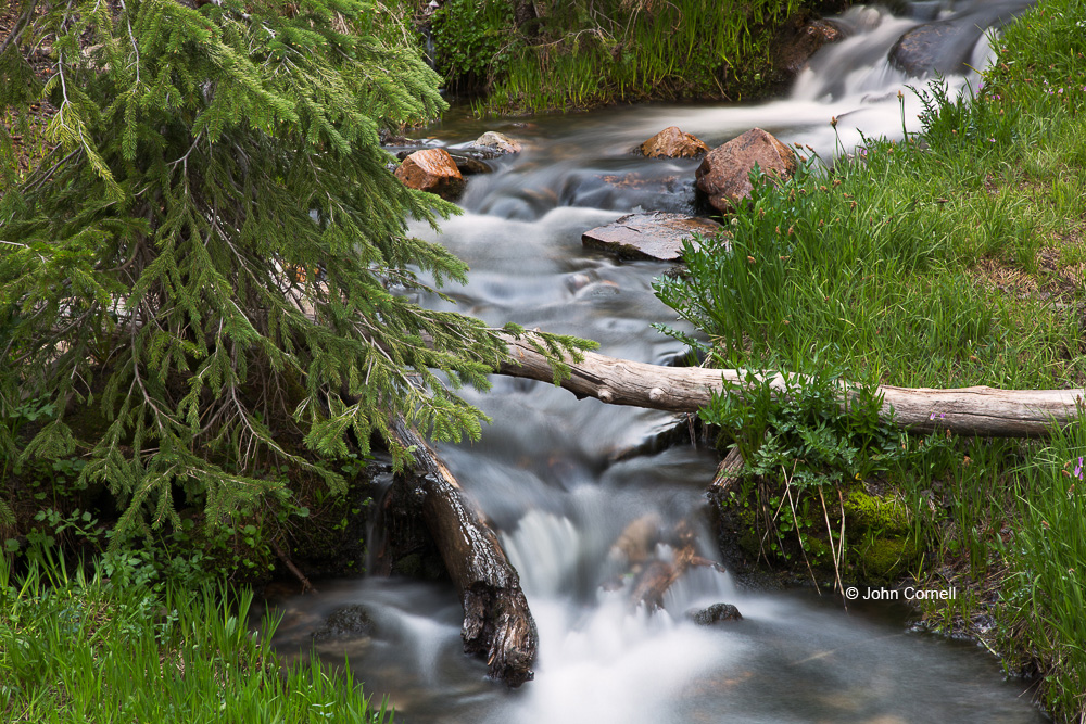 Grass;Great Basin National Park;Lehman Creek;Log;Mountain Brook;Mountains;Nevada;Trees;flowing water