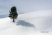 Scenic;Snow;Tree;Winter-Yellowstone-National-Park;Yellowstone-National-Park;Yell