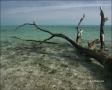 Water;Beach;Driftwood;Waves;Tropical;Blue-Sky