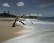 Water;Beach;Driftwood;Waves;Tropical;Surf;Blue-Sky;Scenic
