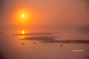 Dawn;Geese;Marsh;Merced-National-Wildlife-Refuge;Merced-National-Wildlife-Reserv