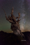 Ancient-Bristlecone-Forest;Bristlecone-Forest;Bristlecone-Pine;California;Dark-S