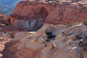 Arch;Canyon;Capitol-Reef-National-Park;Cassidy-Arch;Desert;Erosion;Grand-Gulch;R