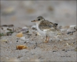 Chick;one-animal;close-up;color-image;nobody;photography;day;birds;animals-in-th